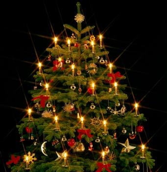 Foto Di Alberi Di Natale.L Albero Di Natale Alternativo